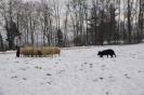 Schafe_12