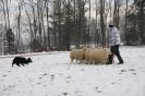 Schafe_13