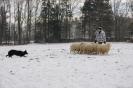 Schafe_14
